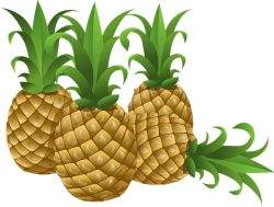 pineapples-576576_640